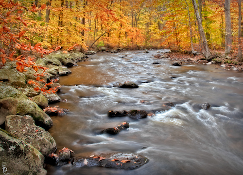 Fall Foliage Covers The Black River