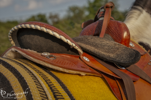 """Western Saddle"" Details of a western saddle on a Pinto Horse."