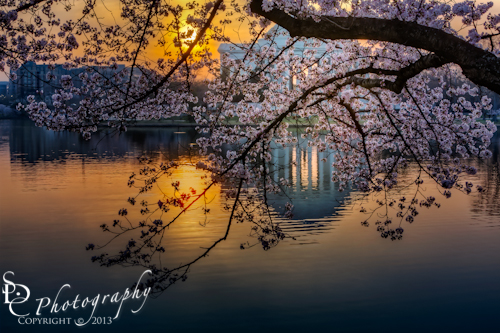 Sunrise At The Thomas Jefferson Memorial