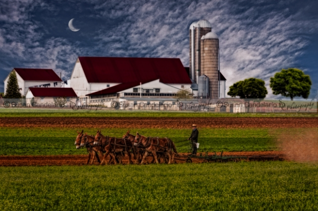 Amish Working The Fields