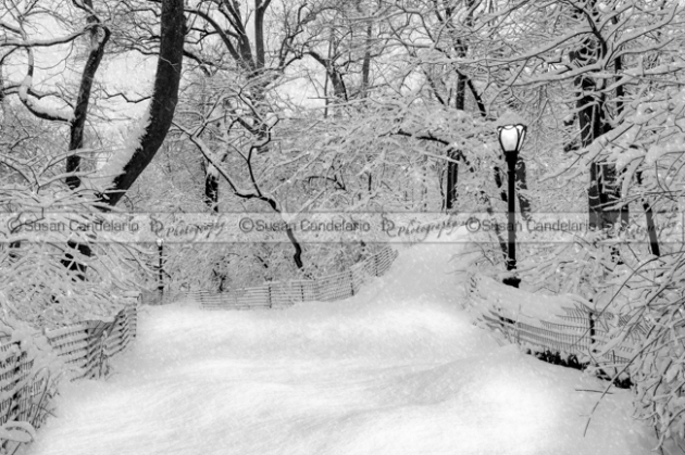 Central Park Dressed Up In White