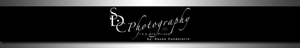 Susan Candelario – SDC Photography logo